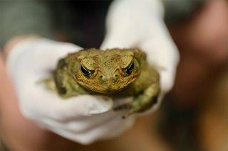 Toxic toads found near Sydney spark fears of southward spread