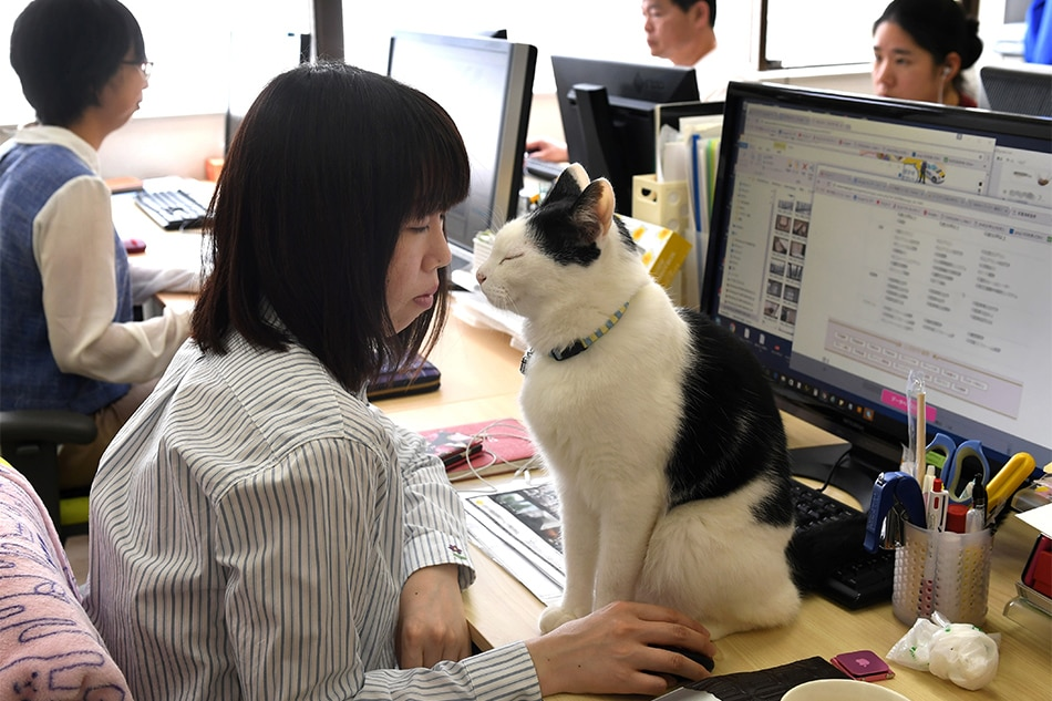 Japan's pet-friendly firms enjoying unexpected benefits