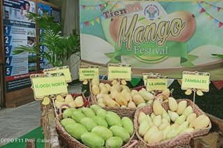 Mangoes for P20 to P50 per kilo: Agri department sets bargain sale amid surplus