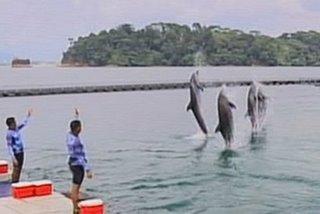 Ocean Adventure posibleng ipasara