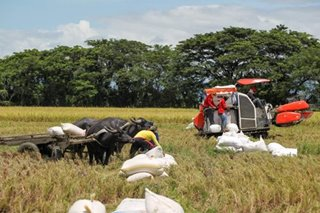 Philippines' agricultural sector rebounds with 2.9 percent growth in Q3