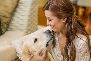 Nikki Gil says goodbye to 'perfect' paw friend