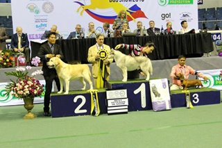 Start the year with a 'bark': Asia's biggest dog show returns