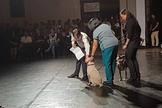 UP Diliman now has emotional support dogs for students, faculty