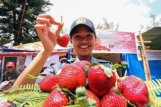 Benguet's Strawberry Festival cancelled amid nCoV concerns