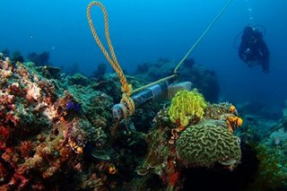Batangas towns strive to balance tourism with coral reefs protection