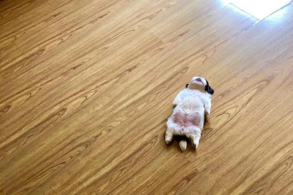 Paningning: Pup with odd sleeping position becomes internet star