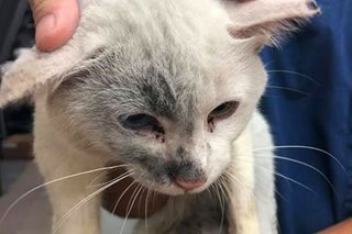 Cat rescued after being dragged by truck in QC now safe, healthy