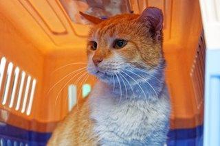 DLSU's cat alumnus Archer passes away due to kidney complications