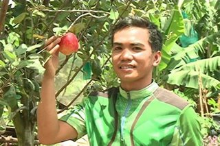 College student successfully grows apple tree in hot Davao del Sur
