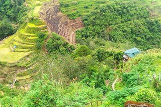Ifugao Rice Terraces in critical stage of deterioration: UN food agency