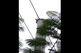 Tuko, nagdulot ng brown-out sa ilang bahagi ng Puerto Princesa