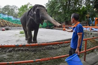 Isko won't sell Manila Zoo, seeks donations for rebuilding