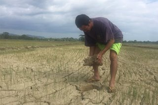 Parched Occidental Mindoro tallies P31-million agri losses
