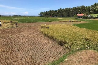 Bohol eyes cloud seeding to combat dry spell