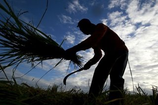 Agri losses in parched areas hit P2.6 billion - disaster agency