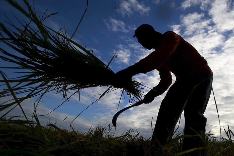 Agriculture losses in Ursula aftermath soar to P1.35 billion