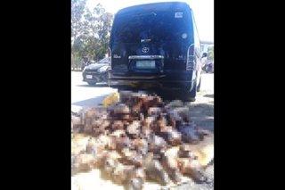 Sako-sakong dog meat nasabat sa Nueva Ecija