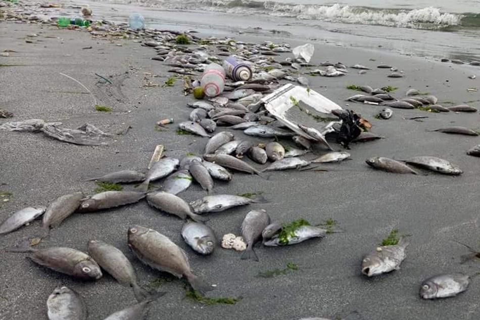 Authorities probe alleged fish kill in Zamboanga