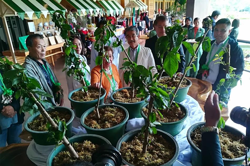 Japanese nationals donate 20 Sakura seedlings to Baguio club 1