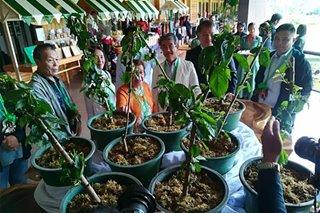 Japanese nationals donate 20 Sakura seedlings to Baguio club