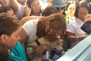 Faithful to the end: Loyal dog bids master goodbye