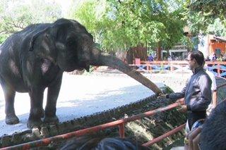 Mayor Isko, nais buksan muli ang Manila Zoo