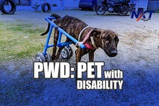 PWD: Pet with disability