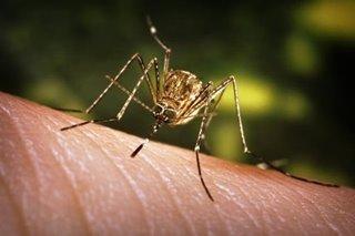 State of calamity idineklara sa Guimaras dahil sa dengue