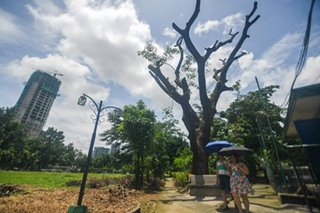 DENR probes Philam Homes after residents complain of tree cutting