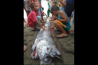 Study debunks Japanese belief in link between deep-sea fish, quake