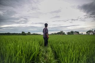 Rice farmers in Nueva Ecija in a time of 'salot'