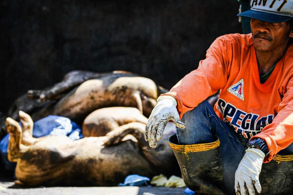 31 of 81 provinces hit with African swine fever