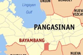 Blood samples ng mga baboy sa bayan sa Pangasinan, positibo sa ASF