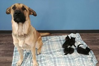 Stray dog saves abandoned kittens from cold Canada winter