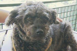 Pets ipasok sa loob ng bahay para maiwasan ang ashfall
