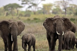 Russia gifts guns to Gabon to fight elephant poaching