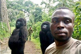 Picture perfect: Congo ranger's gorilla selfie goes viral