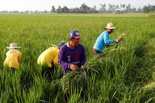 Lawmakers want higher budget for agriculture department