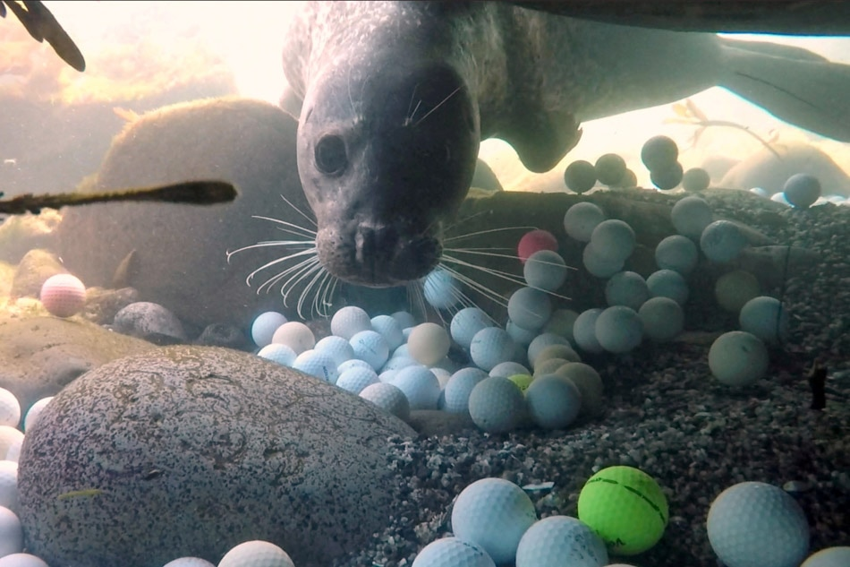 Seals don't play golf