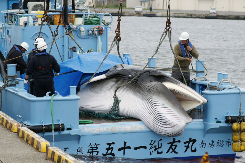Australia criticizes Japan's return to commercial whaling