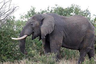 Sri Lanka elephants run amok, 17 injured