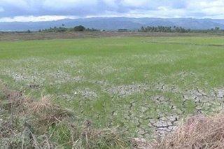 Mga magsasaka sa Davao del Sur, apektado ng dry spell
