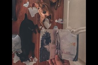 LOOK: After dogs rip passports apart, here's how pet owner reacted
