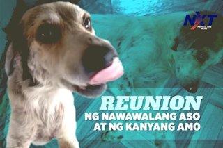 Reunion ng nawawalang aso na si Coco at ng kanyang amo