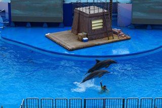 Struggling Hong Kong theme park to end dolphin shows