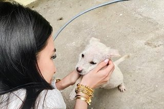 Heart Evangelista visits dogs rescued from Taal, appeals for donations