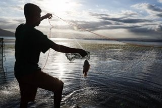 Taal Lake fish kill 'starting' with bangus, agri chief says