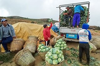 DA says helping Benguet farmers amid oversupply