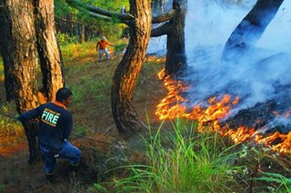 'Kaingin', cattle-raising linked to Benguet forest fire